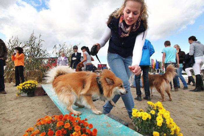 Hund und Pferdeparcours Fotojournalist Oliver Schaper
